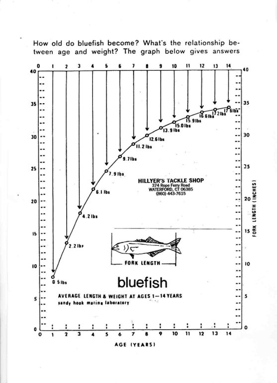 Bluefish Length To Age Chart